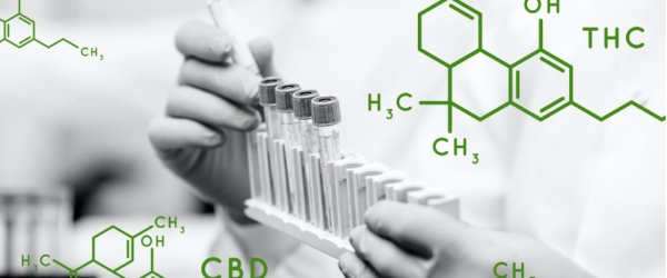 COLA launches new accreditation program for cannabis laboratories
